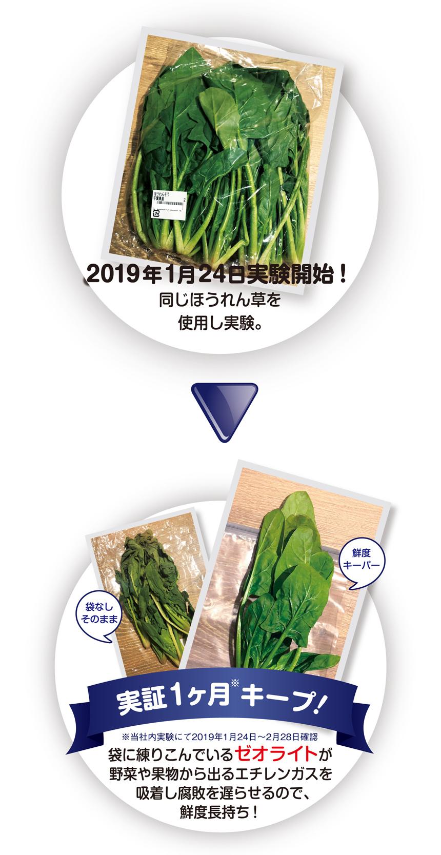 2019年1月24日実験開始!同じほうれん草を使用し実験。実証1ヶ月※キープ!※当社内実験にて2019年1月24日〜2月28日確認  袋に練りこんでいる「ゼオライト」が野菜や果物から出るエチレンガスを吸着し腐敗を遅らせるので、鮮度長持ち!